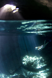 Blue Cave Freediver