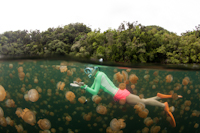 Enjoying in the Jellyfish Lake