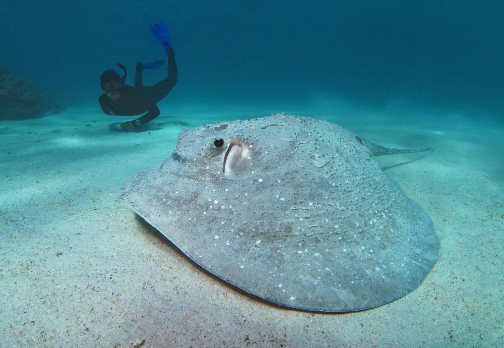 21b4ff8f5 Underwater Festival | Photos | Big Ray