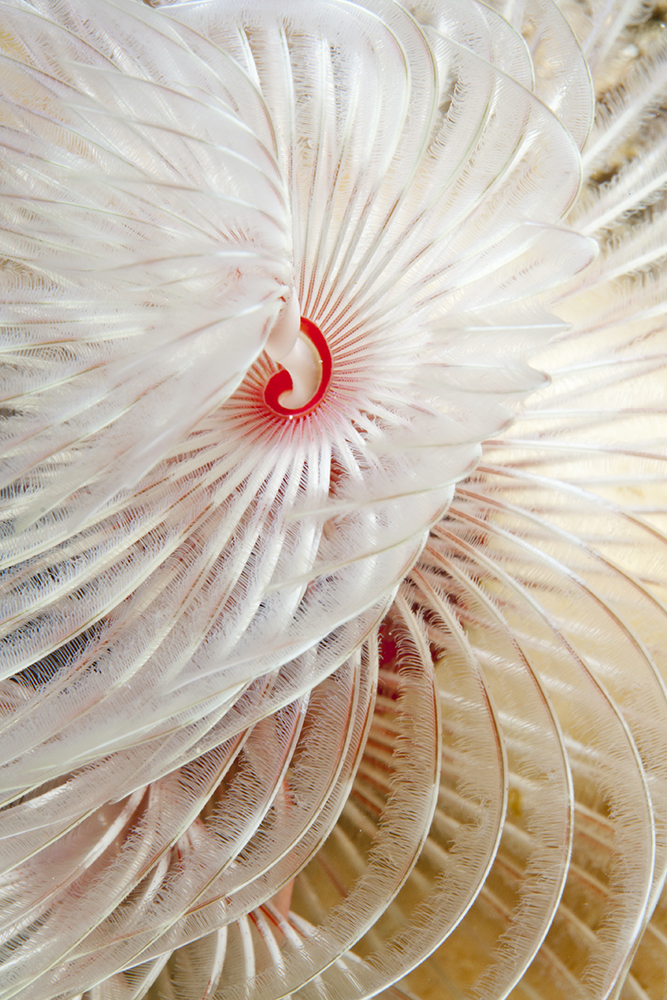 White Feathers Blowing