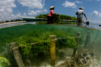 Seaweed Farming Displacing Coral Reef