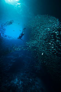Cave Freediving