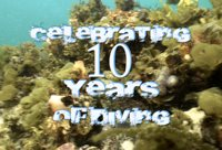 Celebrating 10 years of Diving